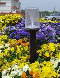 light in flower bed gs